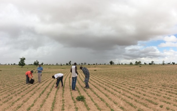 Senegal field work_cropped